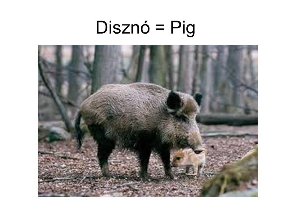 Disznó = Pig