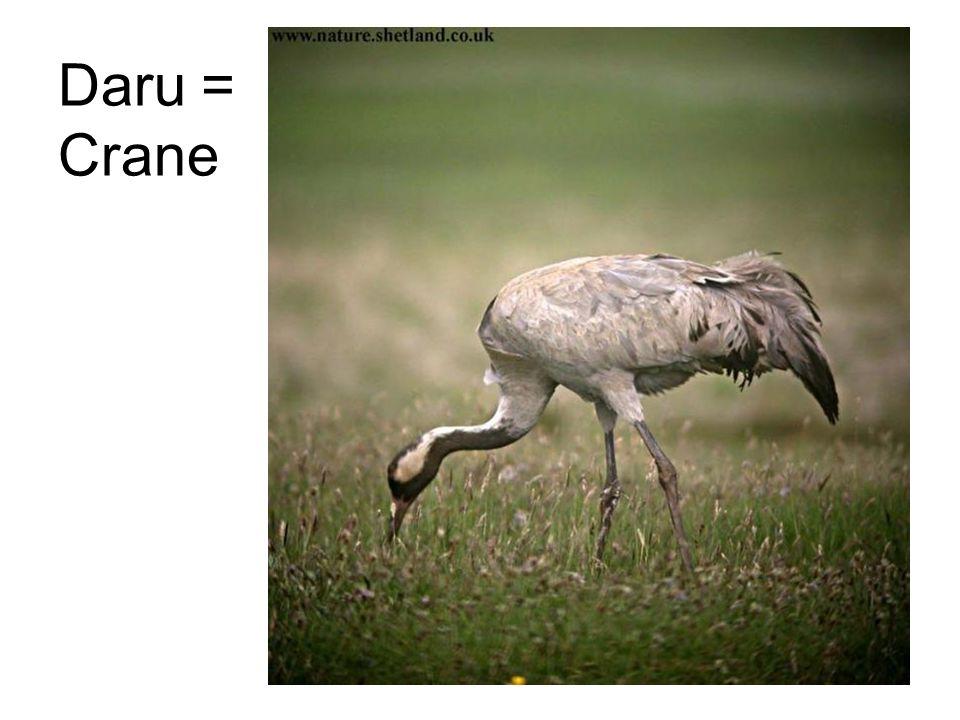Daru = Crane