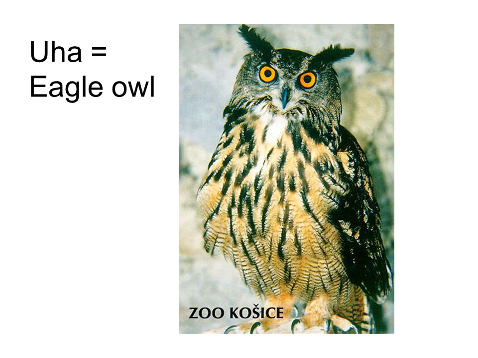 Uha = Eagle owl