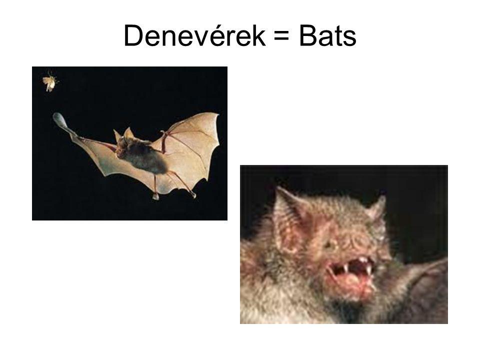 Denevérek = Bats