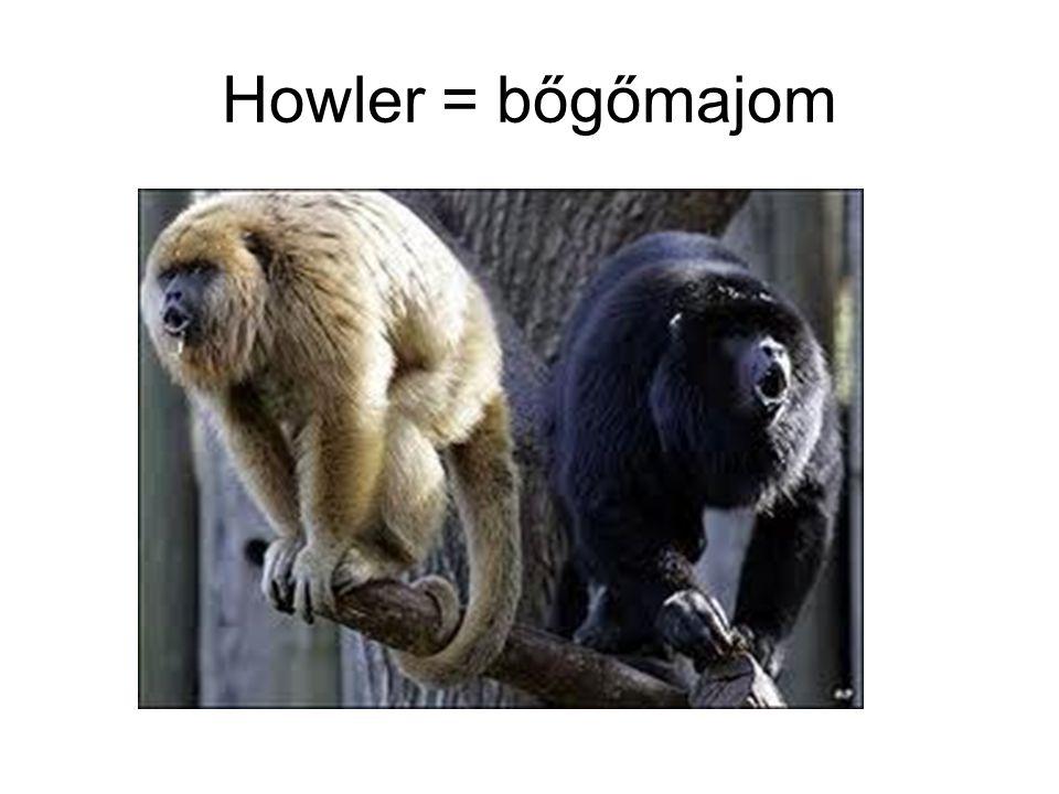 Howler = bőgőmajom