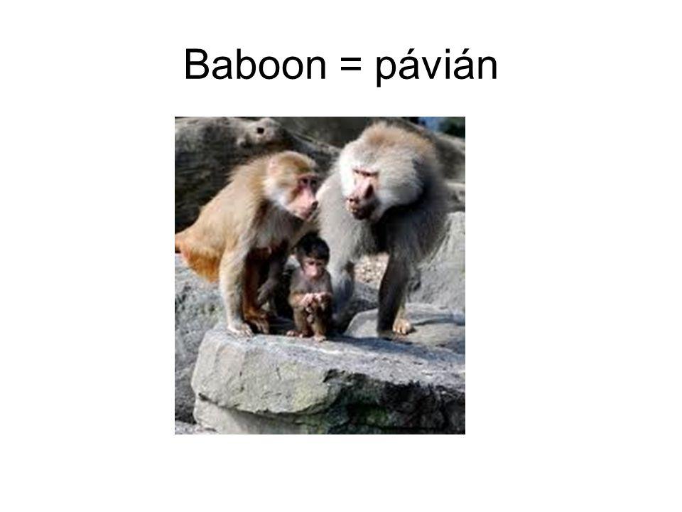 Baboon = pávián