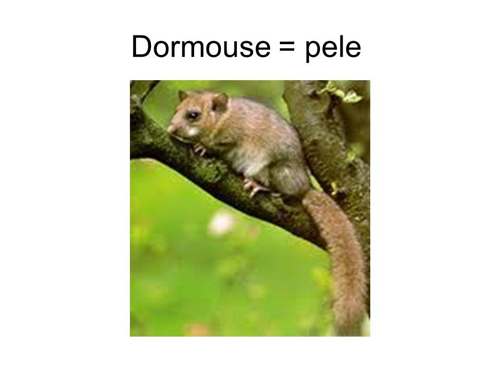 Dormouse = pele
