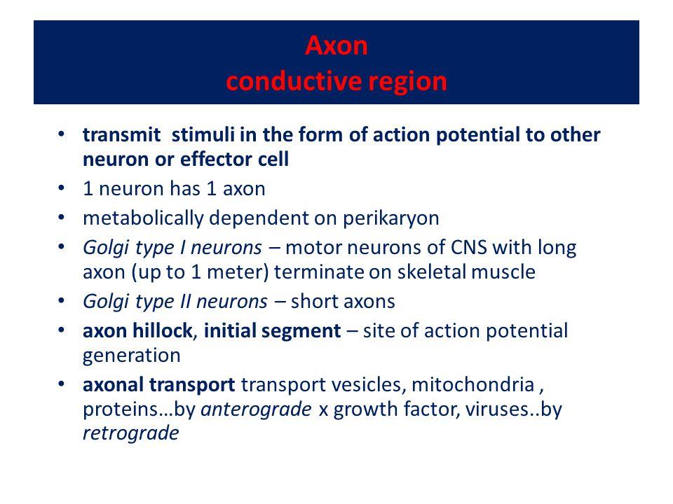 Axon conductive region