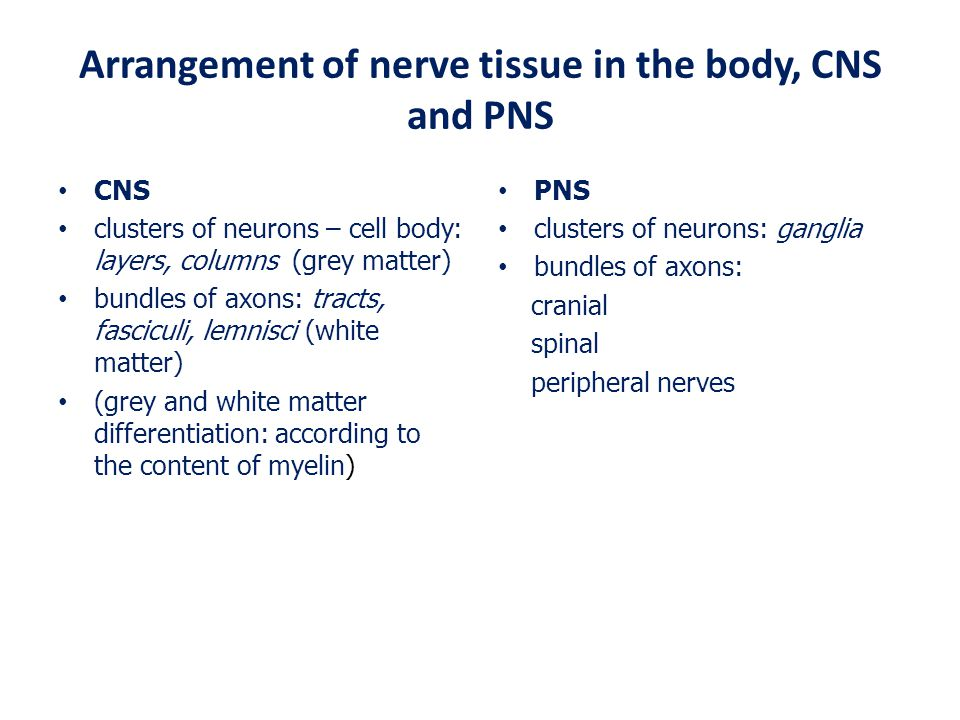 Arrangement of nerve tissue in the body, CNS and PNS
