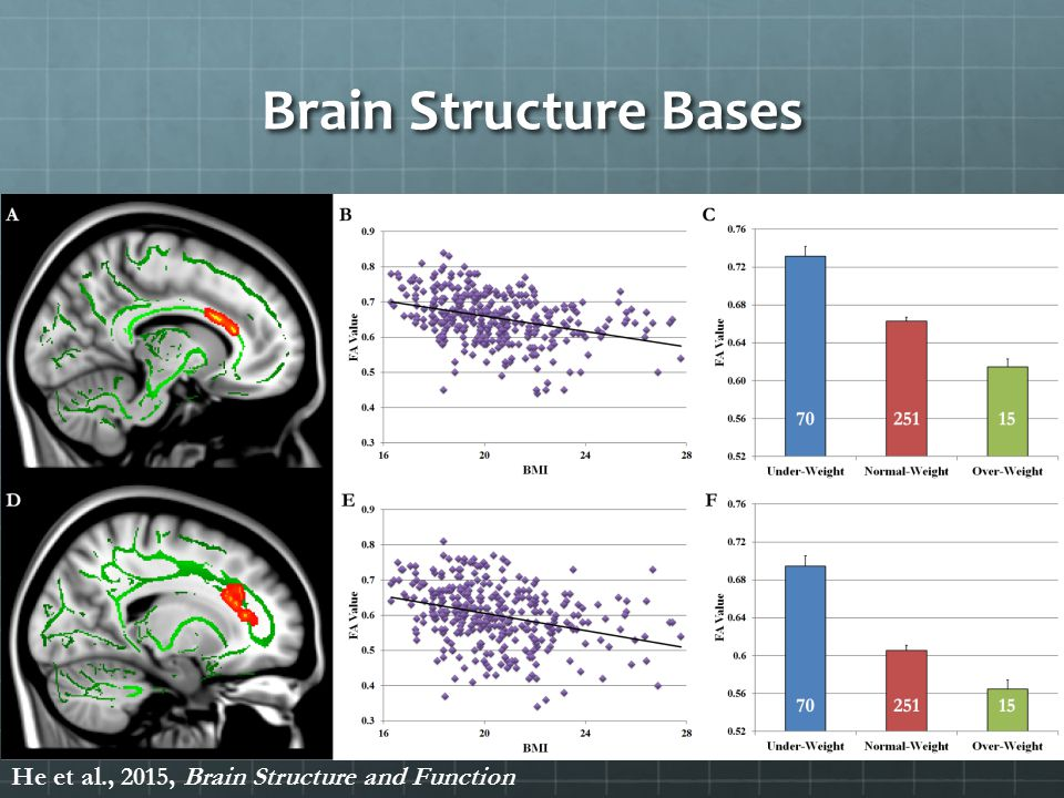 Brain Structure Bases He et al., 2015, Brain Structure and Function