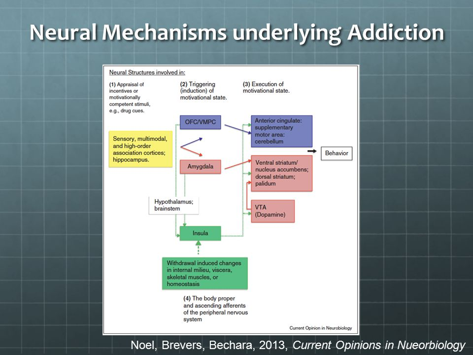 Neural Mechanisms underlying Addiction