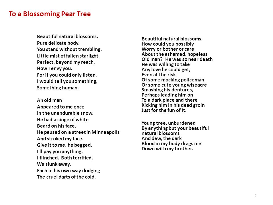 To a Blossoming Pear Tree