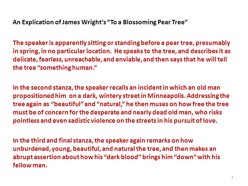 An Explication of James Wright's To a Blossoming Pear Tree