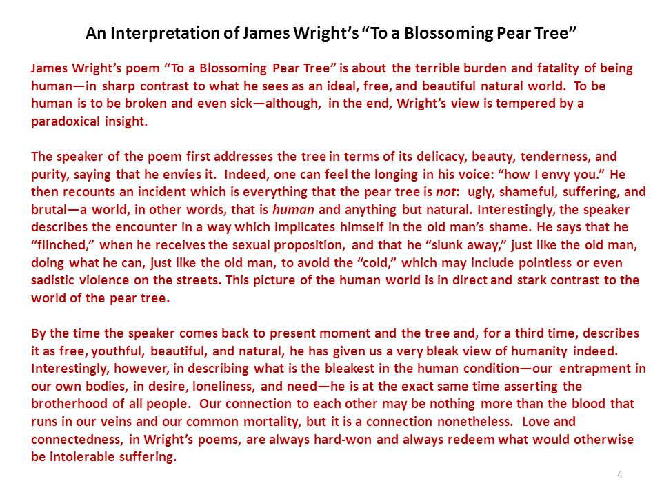 An Interpretation of James Wright's To a Blossoming Pear Tree