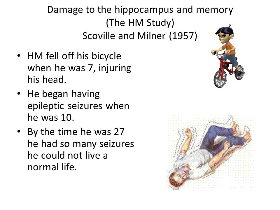 Damage to the hippocampus and memory (The HM Study) Scoville and Milner (1957)