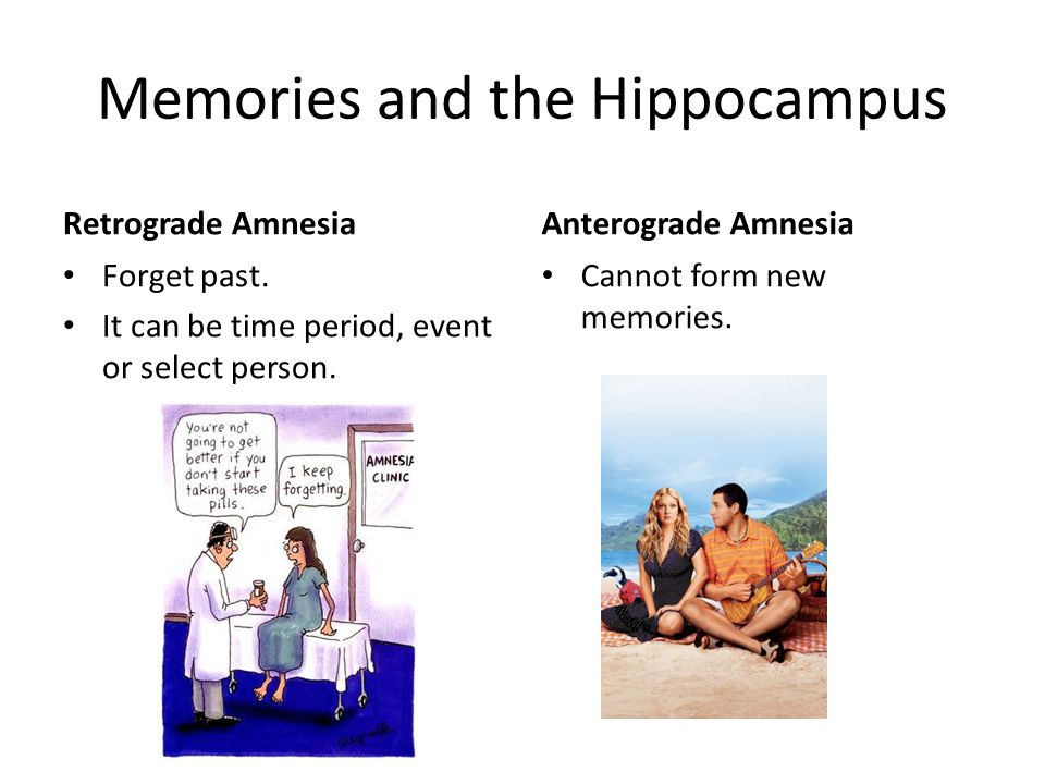 Memories and the Hippocampus