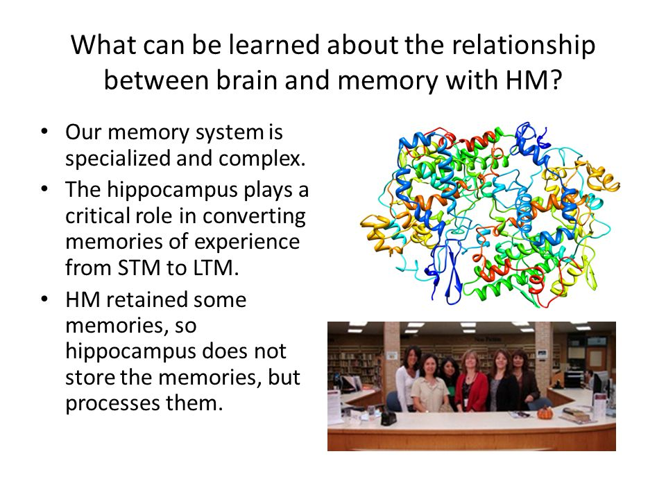 What can be learned about the relationship between brain and memory with HM