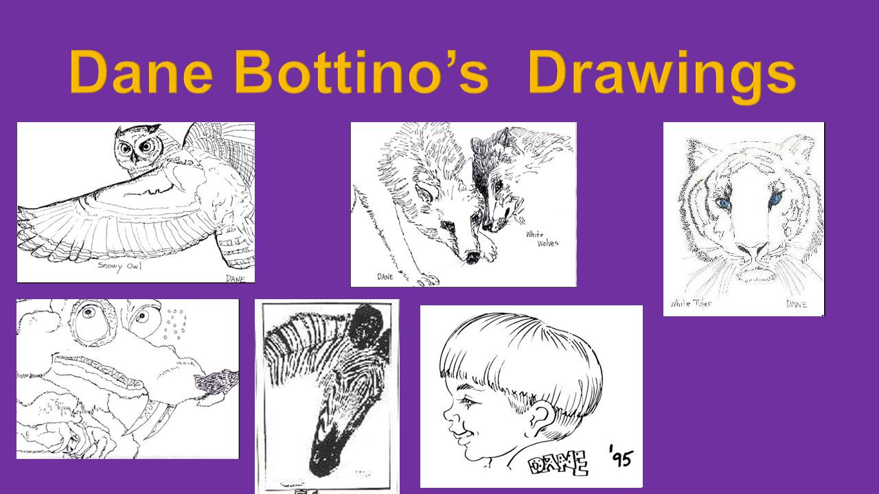 Dane Bottino's Drawings