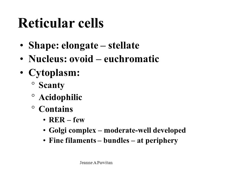 Reticular cells Shape: elongate – stellate
