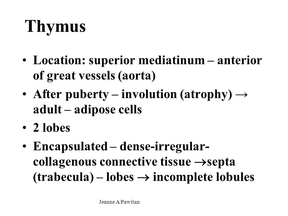 Thymus Location: superior mediatinum – anterior of great vessels (aorta) After puberty – involution (atrophy) → adult – adipose cells.