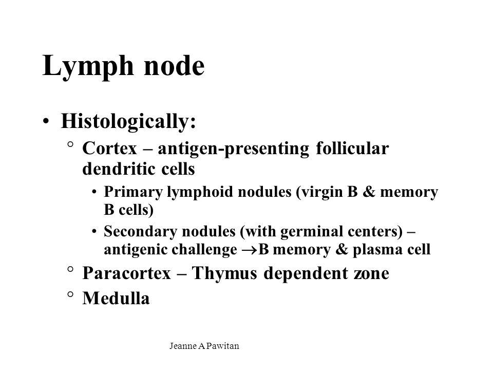 Lymph node Histologically: