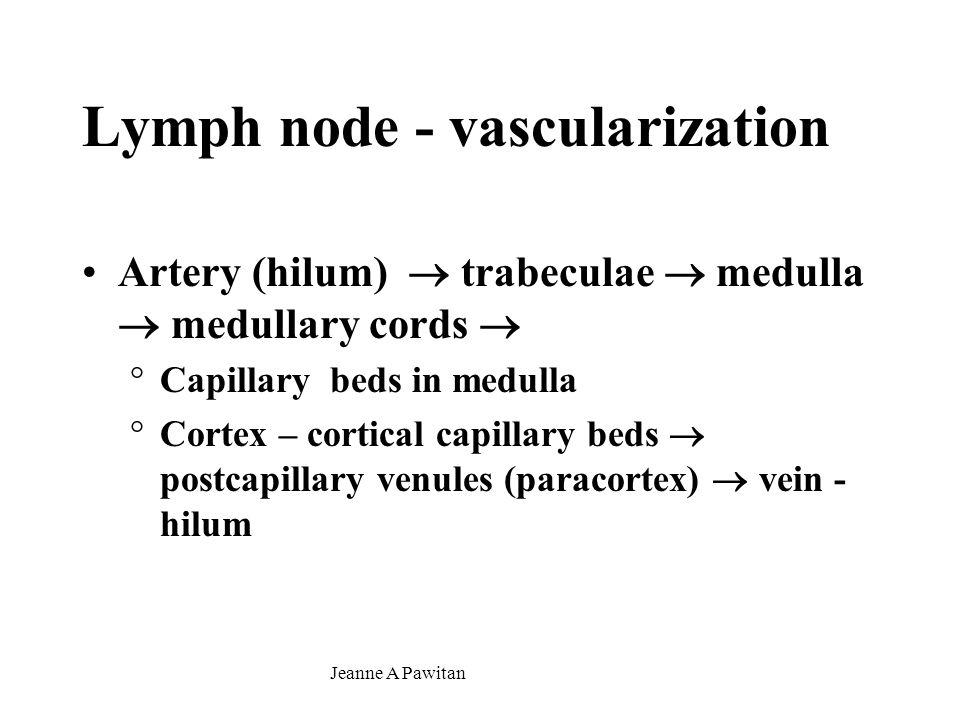 Lymph node - vascularization
