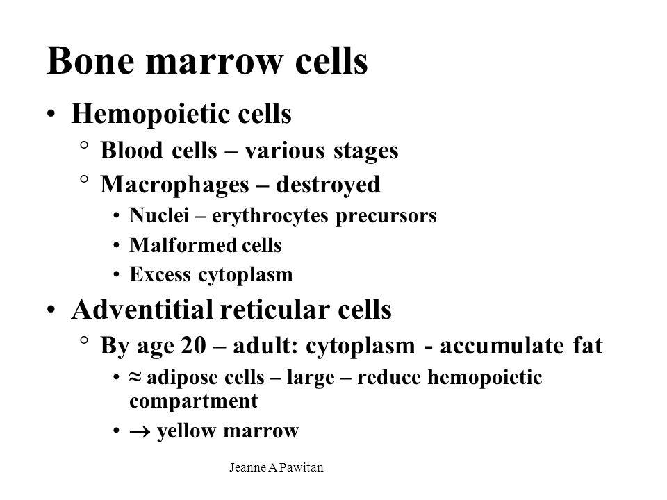 Bone marrow cells Hemopoietic cells Adventitial reticular cells