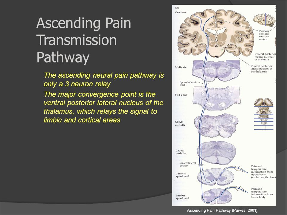Ascending Pain Transmission Pathway