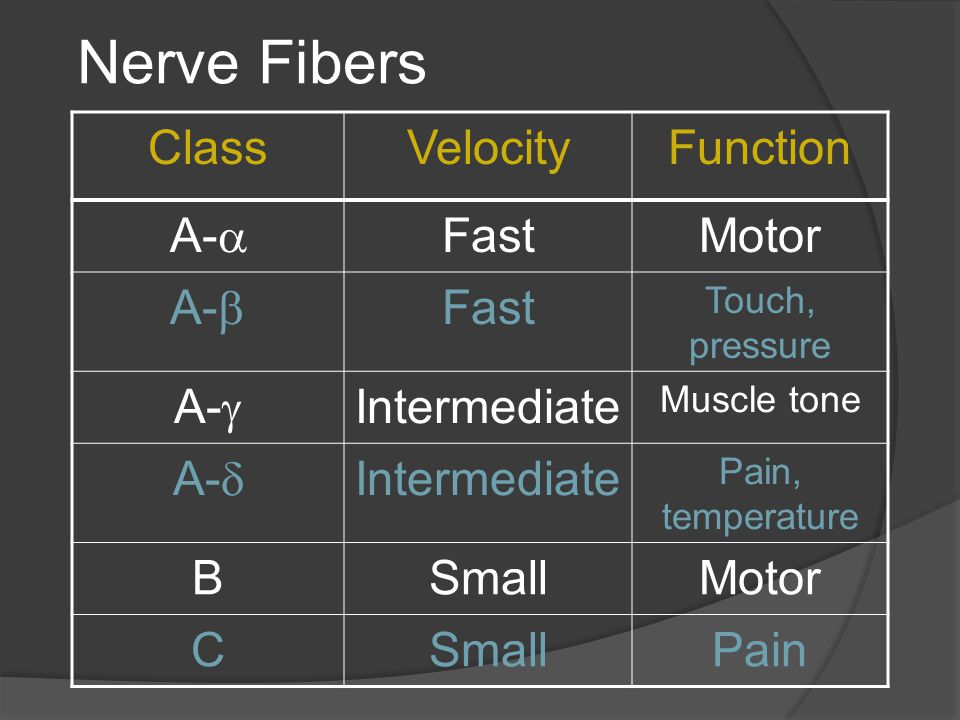 Nerve Fibers Class Velocity Function A- Fast Motor A- A-