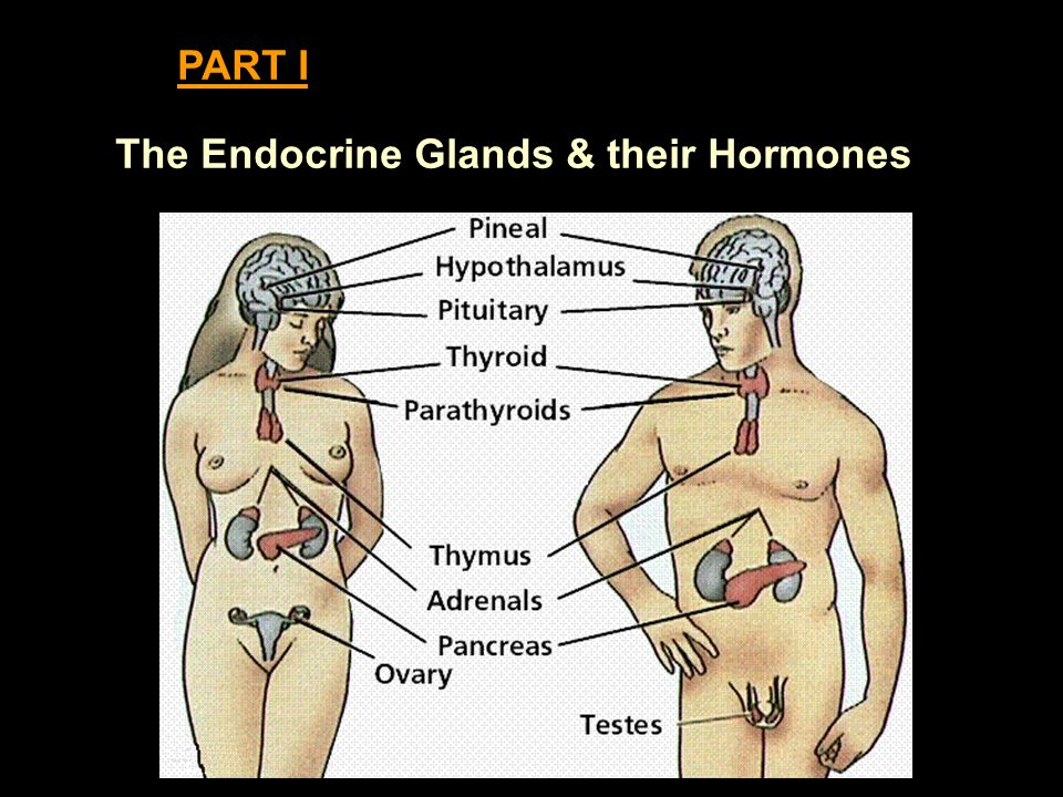 PART I The Endocrine Glands & their Hormones