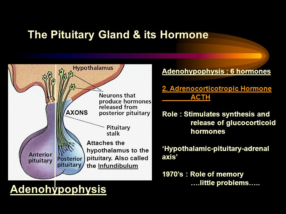 The Pituitary Gland & its Hormone