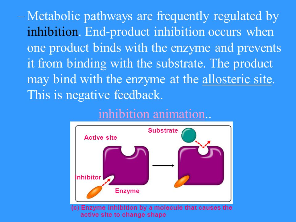 Metabolic pathways are frequently regulated by inhibition