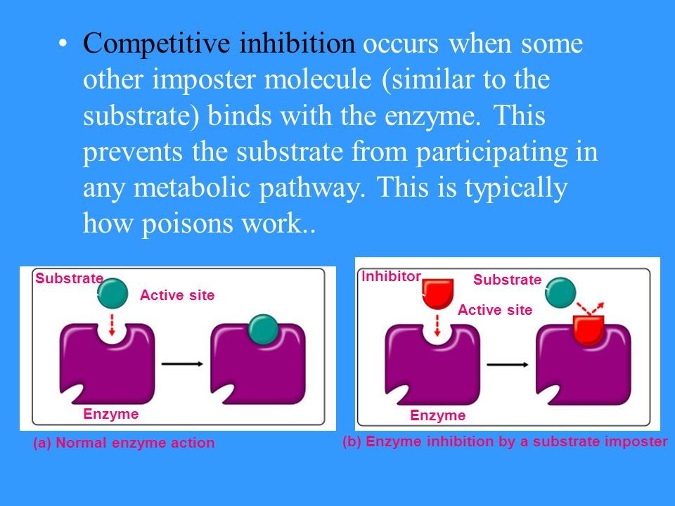 Competitive inhibition occurs when some other imposter molecule (similar to the substrate) binds with the enzyme. This prevents the substrate from participating in any metabolic pathway. This is typically how poisons work..