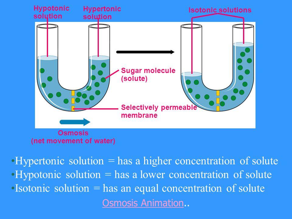 (net movement of water)