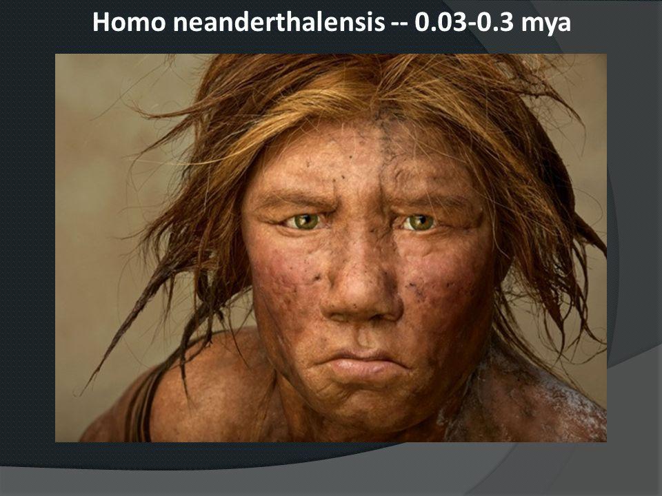 Homo neanderthalensis -- 0.03-0.3 mya