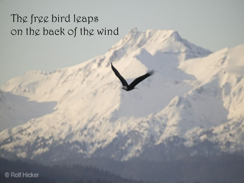 The free bird leaps on the back of the wind