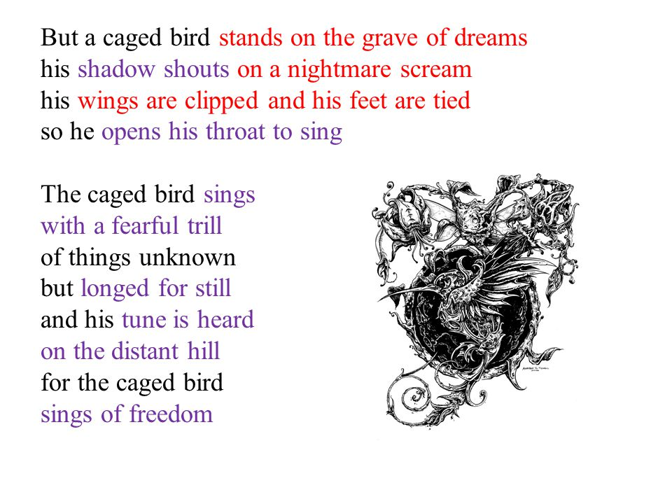 But a caged bird stands on the grave of dreams his shadow shouts on a nightmare scream his wings are clipped and his feet are tied so he opens his throat to sing The caged bird sings with a fearful trill of things unknown but longed for still and his tune is heard on the distant hill for the caged bird sings of freedom
