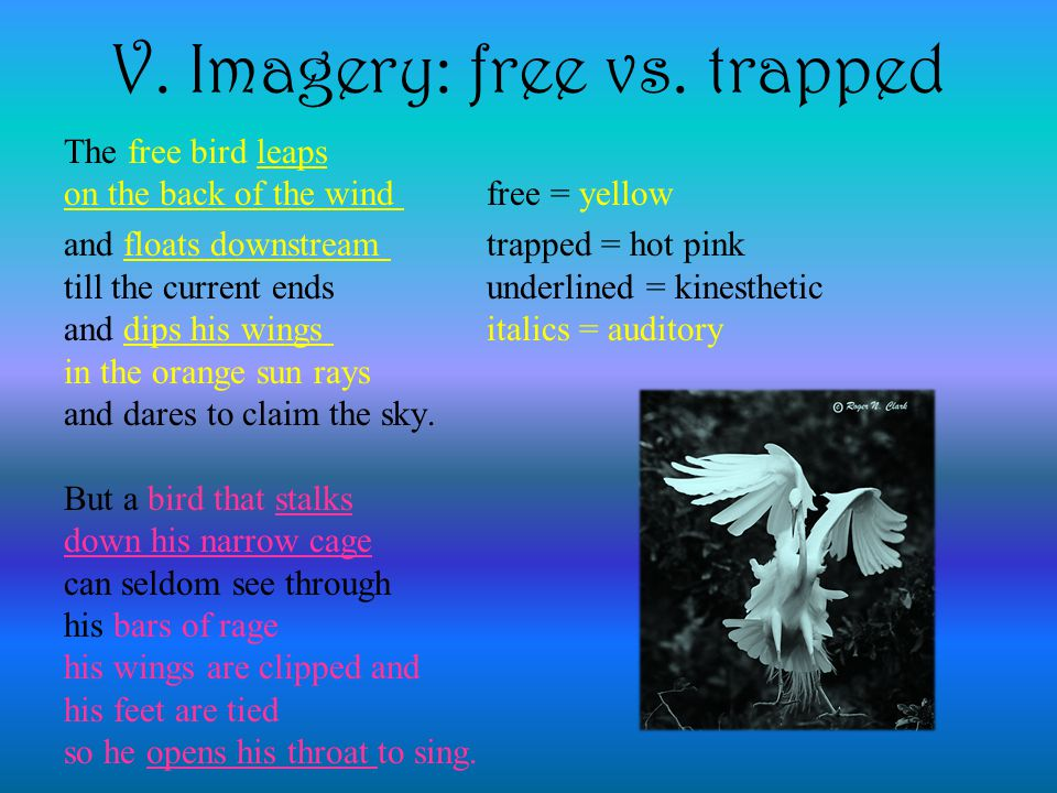V. Imagery: free vs. trapped