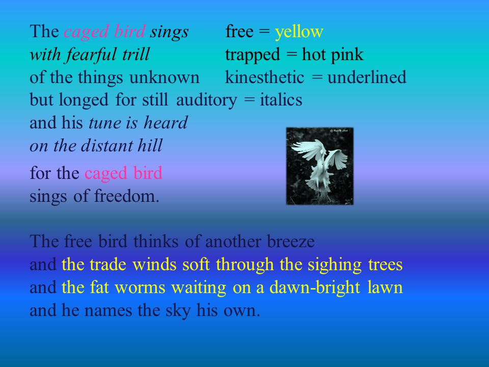 The caged bird sings free = yellow with fearful trill trapped = hot pink of the things unknown kinesthetic = underlined but longed for still auditory = italics and his tune is heard on the distant hill for the caged bird sings of freedom.