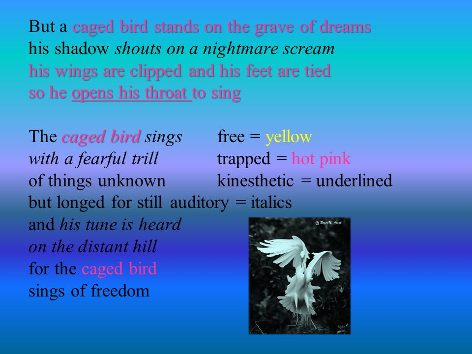 But a caged bird stands on the grave of dreams his shadow shouts on a nightmare scream his wings are clipped and his feet are tied so he opens his throat to sing The caged bird sings free = yellow with a fearful trill trapped = hot pink of things unknown kinesthetic = underlined but longed for still auditory = italics and his tune is heard on the distant hill for the caged bird sings of freedom
