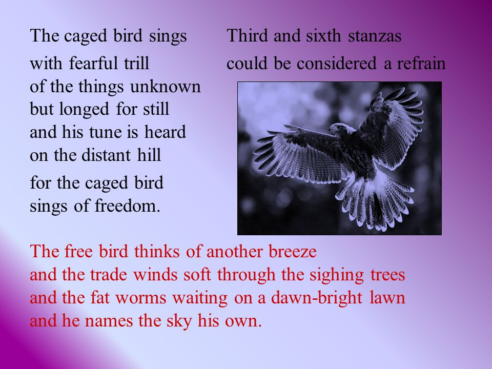 The caged bird sings Third and sixth stanzas with fearful trill could be considered a refrain of the things unknown but longed for still and his tune is heard on the distant hill for the caged bird sings of freedom.