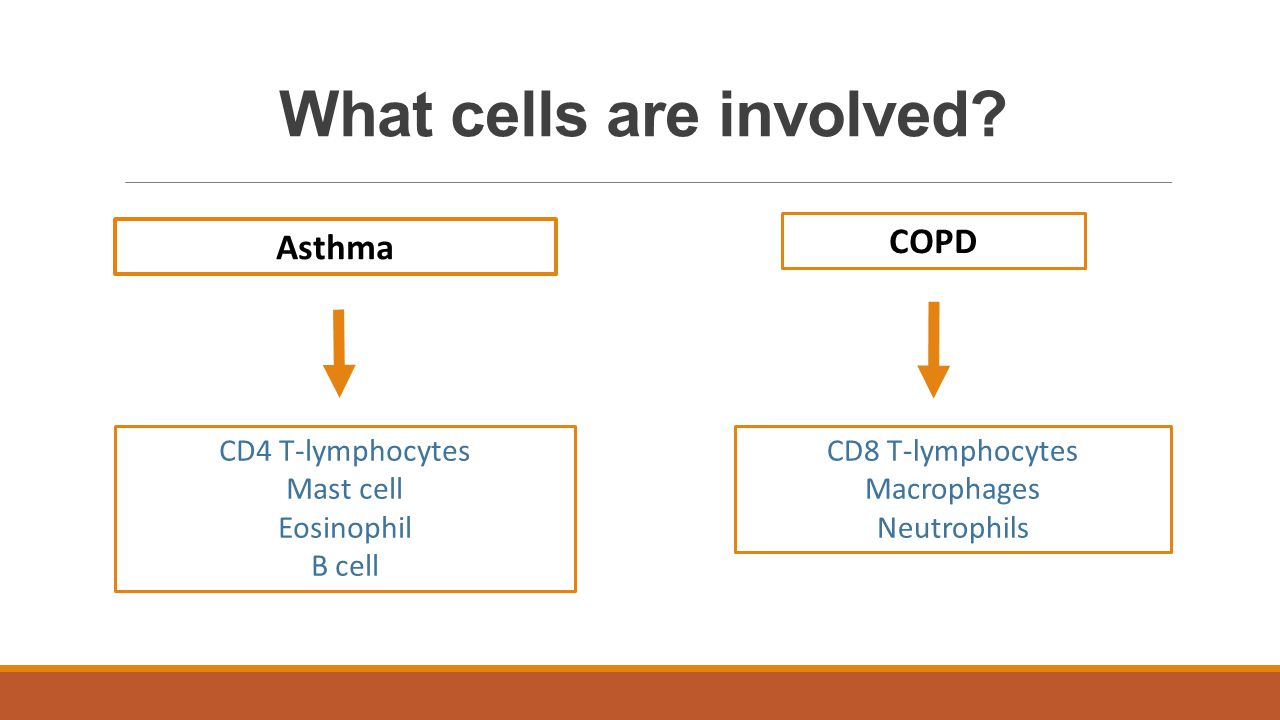 What cells are involved