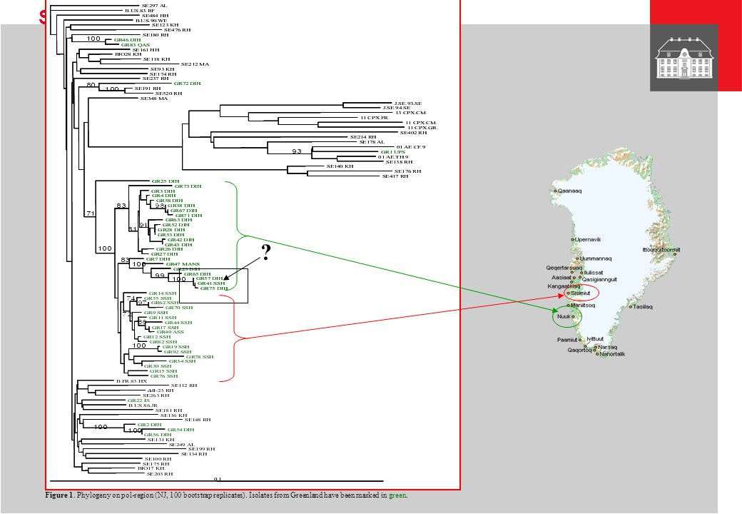 Figure 1. Phylogeny on pol-region (NJ, 100 bootstrap replicates)