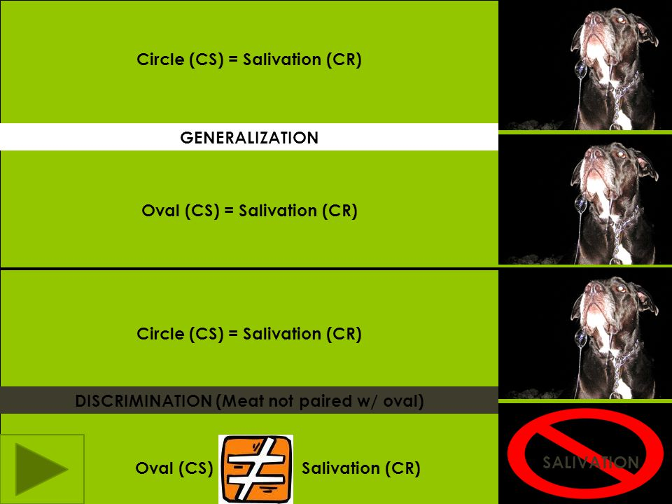 Circle (CS) = Salivation (CR)