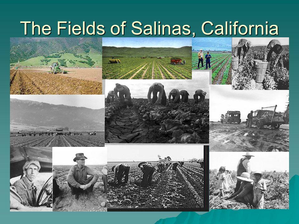 The Fields of Salinas, California