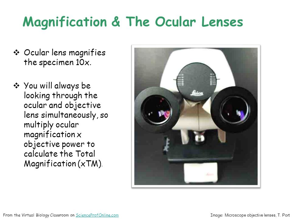 Magnification & The Ocular Lenses