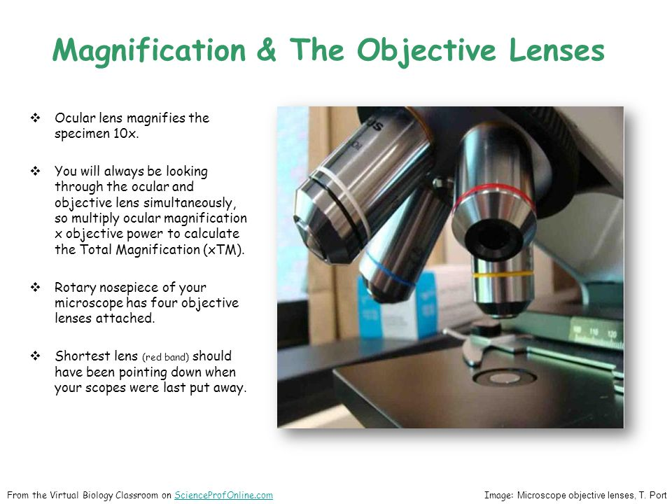 Magnification & The Objective Lenses