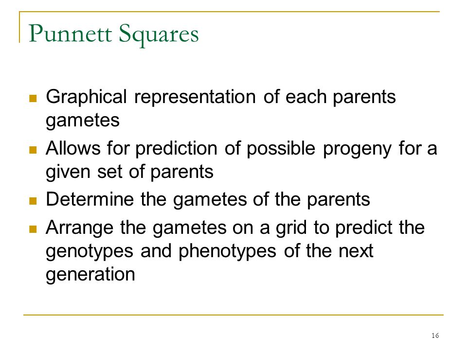 Punnett Squares Graphical representation of each parents gametes