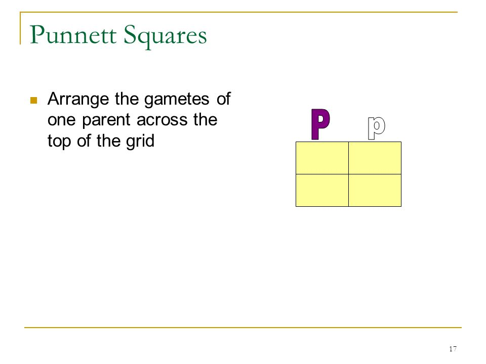 Punnett Squares Arrange the gametes of one parent across the top of the grid P p