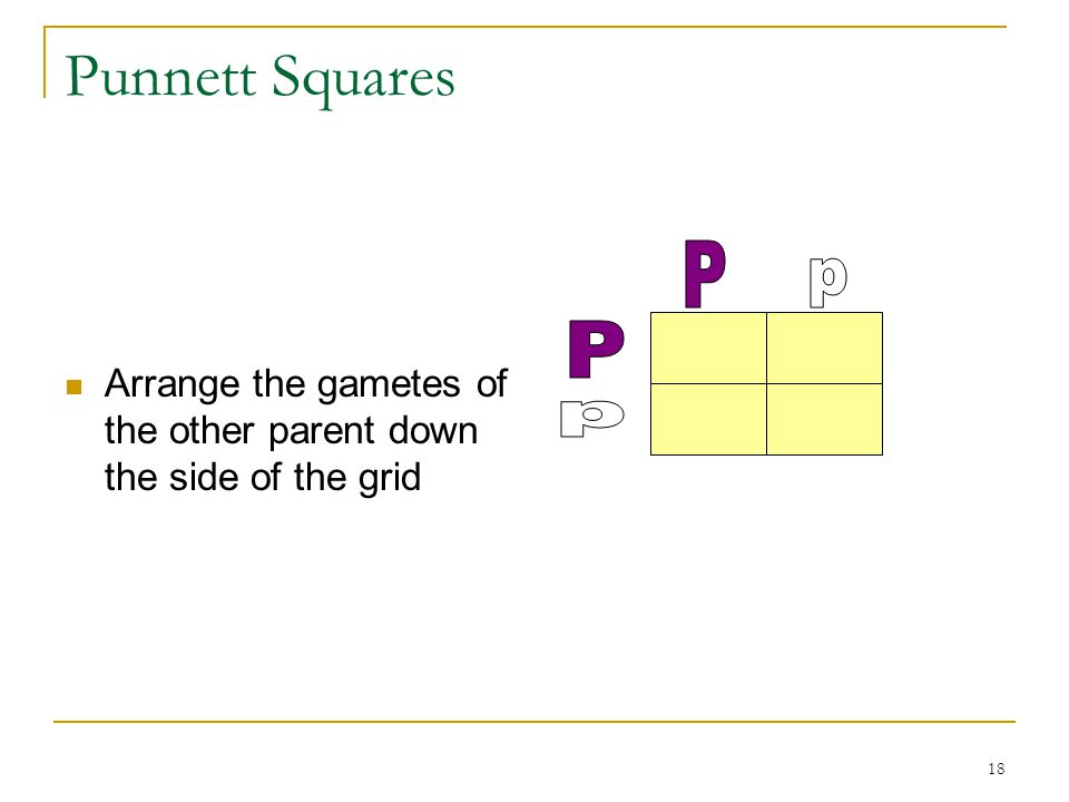 Punnett Squares Arrange the gametes of the other parent down the side of the grid P p P p