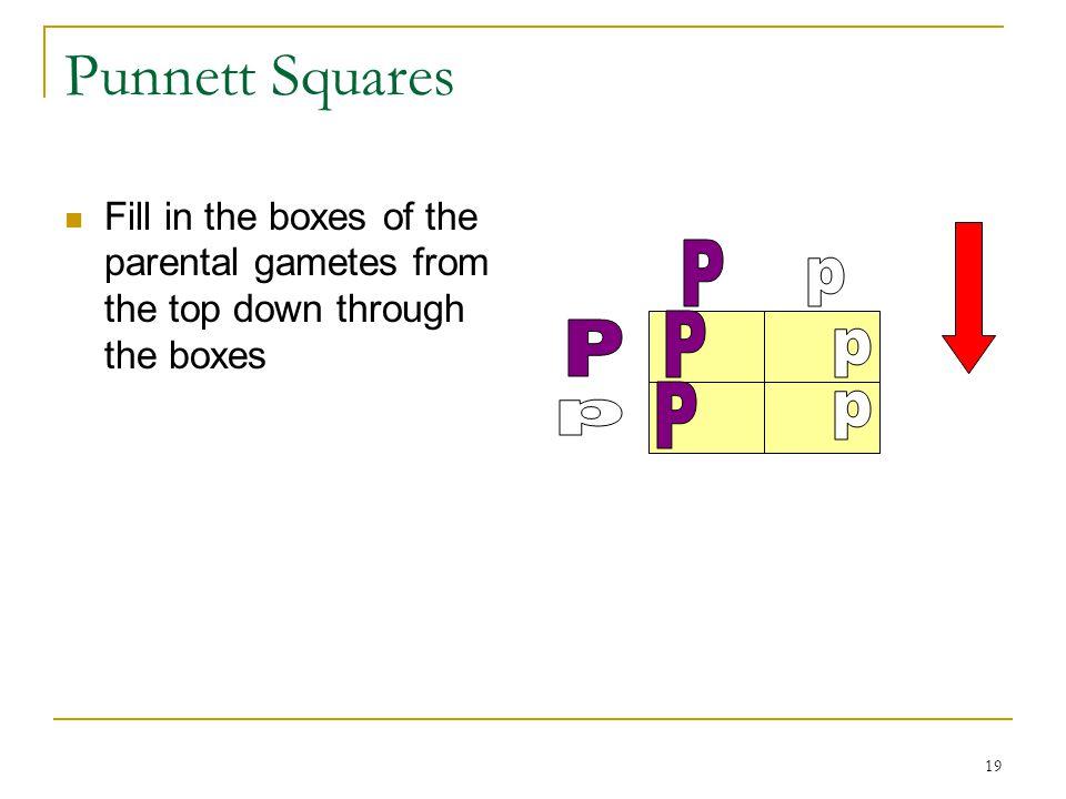 Punnett Squares P p P P p P p p