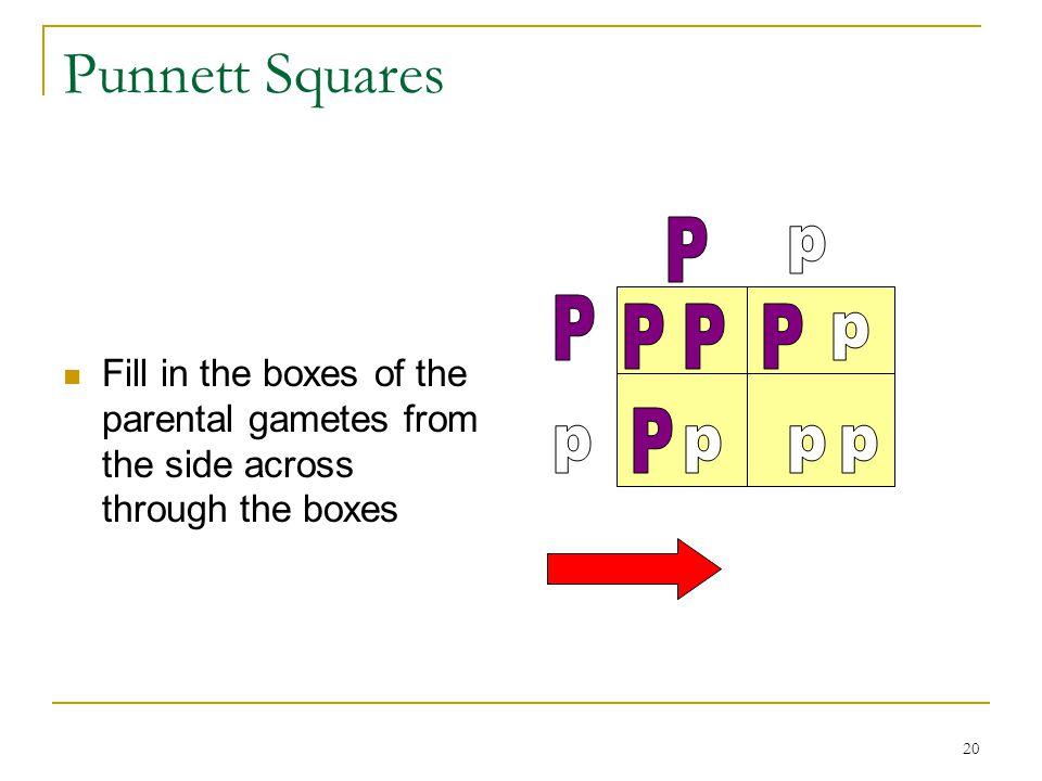 Punnett Squares P p P P P P p P p p p p
