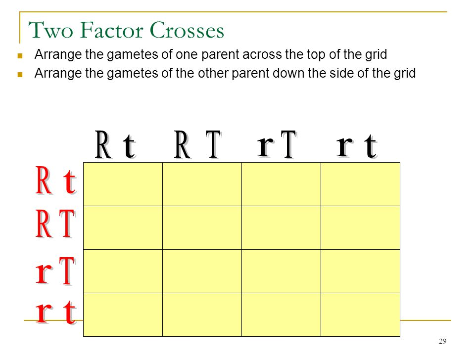 Two Factor Crosses R t r T
