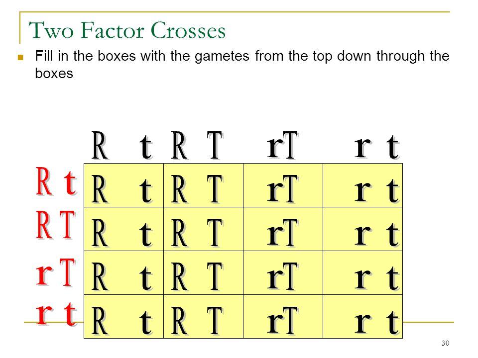Two Factor Crosses R r t T R t R r t T R T R r t T T R r t T r t r R r